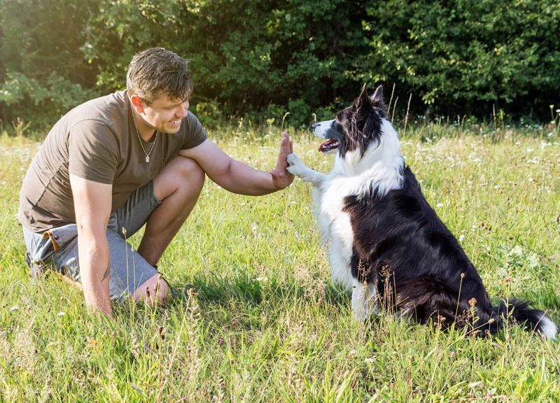 the secret language of the dogs